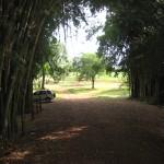 Bambuzal_002