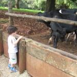JV e os animais_001
